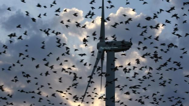 Ziehende Stare vor Windkraftanlage (Foto: Maik Sommerhaage)
