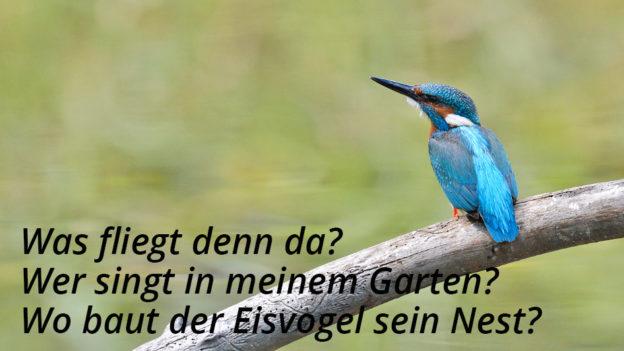 Foto: Hansruedi Weyrich (www.weyrichfoto.ch)