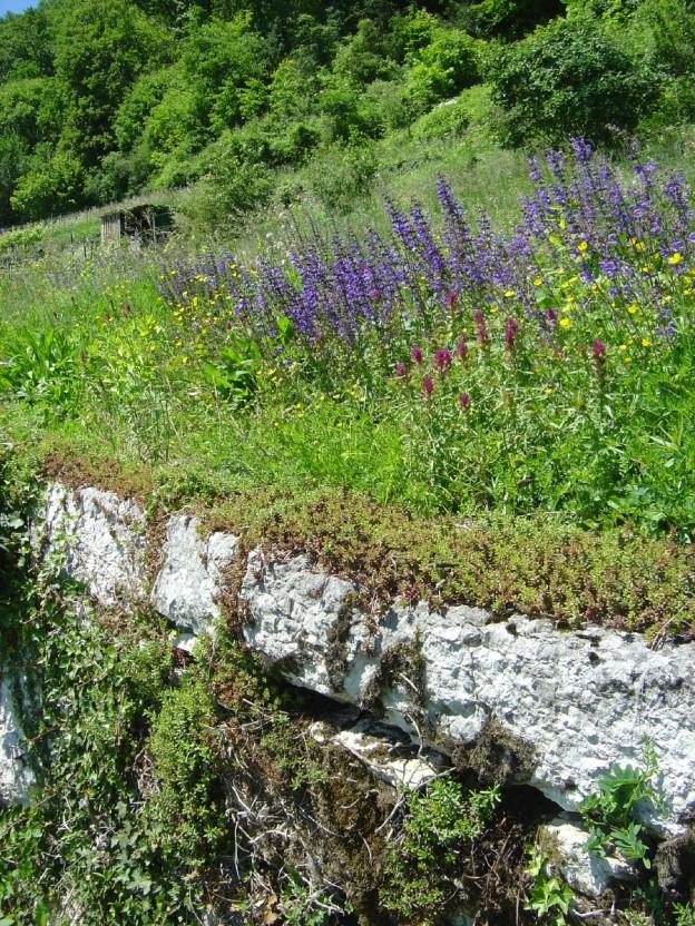 http://www.landschaftswerk.ch/images/landschaftswerk2.01ln1319.05.20071.jpg
